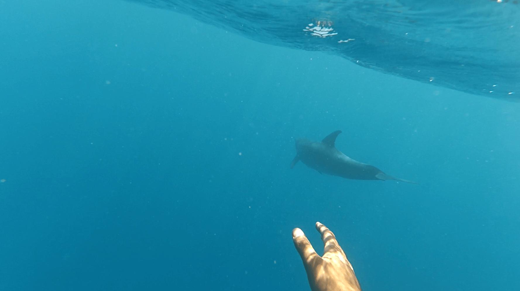 delfini-hurgada-4
