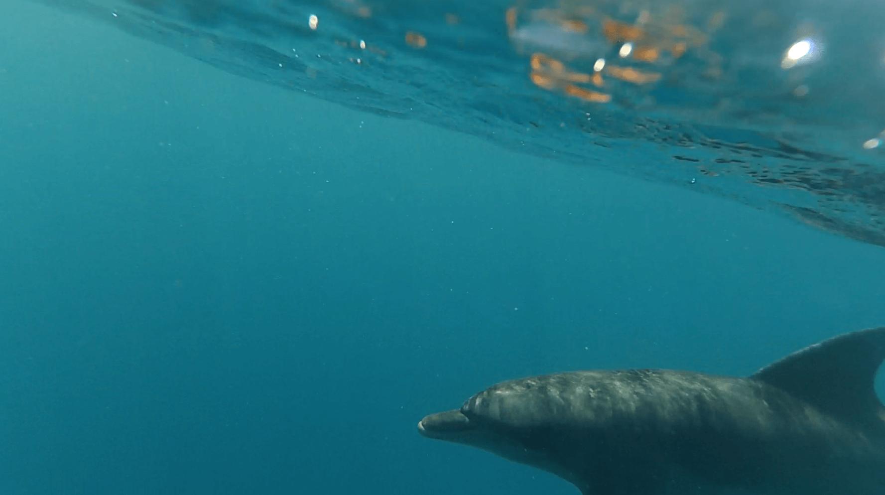 delfini-hurgada-1